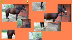 Horse Puzzle For Kids screenshot 2/4