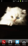 Cute Kitty Cat HD LW screenshot 1/4