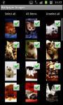 Cute Kitty Cat HD LW screenshot 3/4