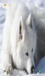 Wolf HD Wallpapers screenshot 3/5