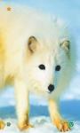 Wolf HD Wallpapers screenshot 4/5