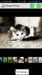 Photos Of Cats screenshot 2/4