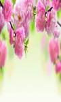 Spring Flowers Wallpaper 2015 screenshot 3/4
