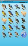 Small Birds Memory Game Free screenshot 4/4