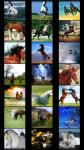 Horses Wallpapers free screenshot 1/6