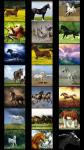 Horses Wallpapers free screenshot 2/6