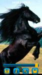 Horses Wallpapers free screenshot 6/6