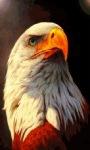 Eagle Watching Live Wallpaper screenshot 1/3