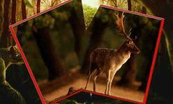 Kill Deer All screenshot 3/6