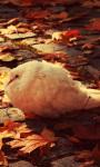 White Dove Autumn Live Wallpaper screenshot 1/4