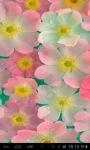 Pink Anemones lwp screenshot 1/2