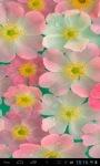 Pink Anemones lwp screenshot 2/2