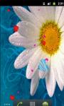 Daisy Flower Love Live Wallpaper screenshot 3/5