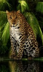 Forest Leopard Live Wallpaper screenshot 1/3