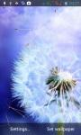Dandelions LWP screenshot 3/6
