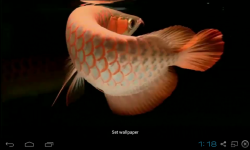 Real Arowana Live Wallpaper screenshot 3/4