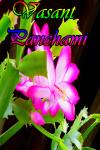 Hindu Festival Vasant Panchami screenshot 1/4