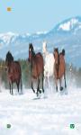 Horse Wallpapers HD free screenshot 1/6