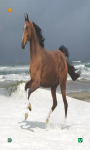 Horse Wallpapers HD free screenshot 2/6