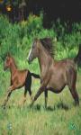 Horse Wallpapers HD free screenshot 3/6