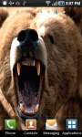 Angry Bear Live Wallpaper screenshot 3/3