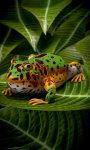 Pacman Frog screenshot 3/5