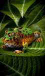 Pacman Frog screenshot 4/5