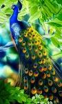 Peacock feather LWP screenshot 1/3