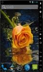 Beautiful Orange Rose Live Wallpaper screenshot 2/2
