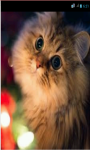 Cute Cat HD Wallpapers screenshot 1/5