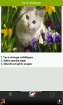 Cute Cat HD Wallpapers screenshot 5/5