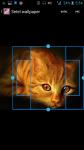 Photos Of Cats And Kittens screenshot 3/4