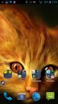 Photos Of Cats And Kittens screenshot 4/4