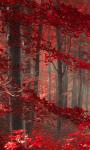 Enchanted Forest Live Wallpaper screenshot 1/3