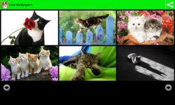 Best Cats Wallpapers screenshot 3/6