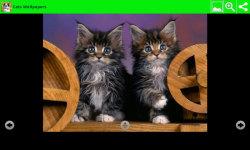 Best Cats Wallpapers screenshot 4/6