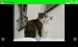 Best Cats Wallpapers screenshot 6/6