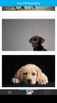 Dog Photography screenshot 2/6