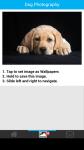 Dog Photography screenshot 3/6