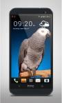 Grey Parrot Live Wallpaper screenshot 1/3