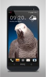 Grey Parrot Live Wallpaper screenshot 2/3