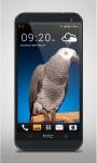 Grey Parrot Live Wallpaper screenshot 3/3