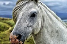 Beautiful Horse Wallpaper screenshot 1/6