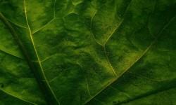 Galaxy Leaf Live HD Wallpaper screenshot 1/4