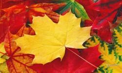 Galaxy Leaf Live HD Wallpaper screenshot 2/4