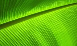 Galaxy Leaf Live HD Wallpaper screenshot 4/4