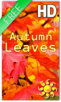 Autumn Leaves HD Free screenshot 1/2