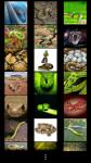 Snakes Wallpapers free screenshot 2/6