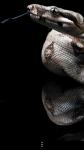 Snakes Wallpapers free screenshot 4/6