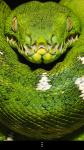Snakes Wallpapers free screenshot 5/6
